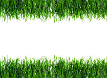 Dew on spring grass. Dew on Seamless fresh spring green grass isolated on white background Royalty Free Stock Images