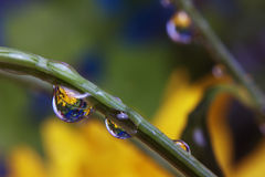 Dew on stem. On blur background Stock Photography