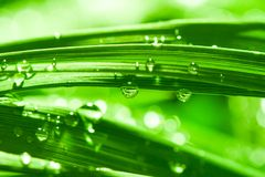 Dew and sunshine Stock Photography