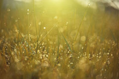 Dew on top grass Royalty Free Stock Photo
