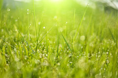 Dew on top grass Royalty Free Stock Photos