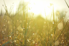 Dew on top grass Stock Images