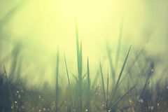 Dew on top grass Royalty Free Stock Images
