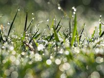 Dew on the top of the grass stock photography