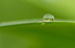 The dew. In warm season early in the morning, people in the roadside grass, leaves and crops can often be seen on dew, dew and frost, nor does it come down from Stock Photo