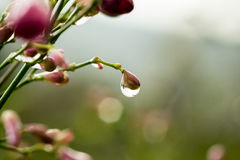 Dew water drops. Close up Stock Images