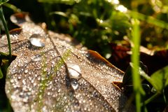Dew water drops on a leaf in morning light of a meadow Stock Images