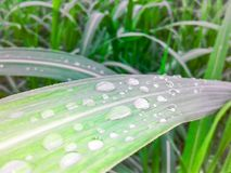 Beautiful water drops on green leaf. Royalty Free Stock Images