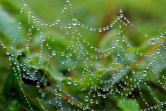 Dew on the Web. Closeup of dew on a cobweb in the rain Stock Photography