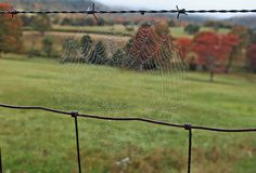 Dew on the Web. Early morning dew on a spiderweb in southern West Virginia during the fall Royalty Free Stock Photos