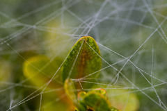 Dew on web Royalty Free Stock Photography