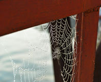 Dew on the web. Stock Image