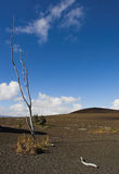 dewastacyjni parku narodowego Hawaii śladu wulkany Fotografia Royalty Free