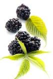 Dewberries arkivfoto