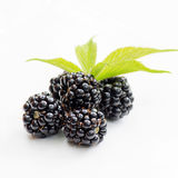 Dewberries Royalty Free Stock Photography