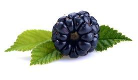 Dewberries (björnbär) och gräsplansidor fotografering för bildbyråer