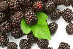Dewberry Stock Images