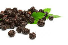 Dewberry Stock Photos
