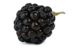 Dewberry Royalty Free Stock Image