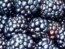 Dewberry. Berries. Texture. Royalty Free Stock Photo