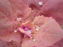 dewdrop стоковые изображения