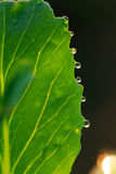 Dewdrop Royalty Free Stock Images