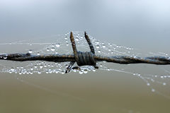 Dewdrop auf Stacheldraht Stockfoto