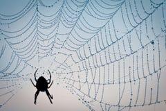 Dewdrop im Spinnenweb lizenzfreie stockfotografie