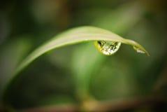 Dewdrop on a Leaf Stock Images