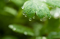 Dewdrop on leaf Royalty Free Stock Photography
