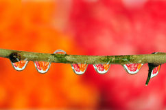 Dewdrop refraction Stock Image