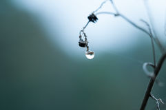 Dewdrop on seed Royalty Free Stock Photo