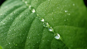Dewdrop  Royalty Free Stock Photography