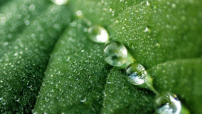 Dewdrop Stock Photography