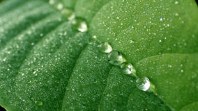 Dewdrop Stock Photo