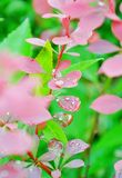 dewdrops fotografia stock