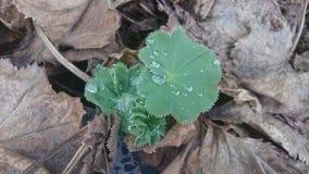 dewdrops стоковые фото