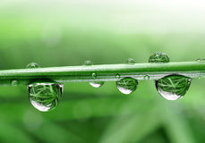 Dewdrops Royalty Free Stock Images