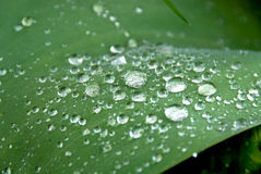 Dewdrops Royalty Free Stock Photos
