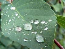 dewdrops Foto de Stock