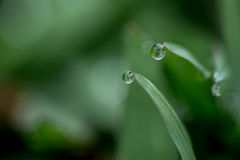dewdrops Images stock