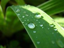 Dewdrops Fotografia Stock Libera da Diritti