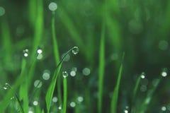 dewdrops zdjęcie stock
