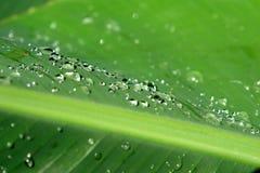 dewdrops Стоковое Изображение