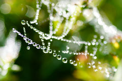 dewdrops Imagem de Stock Royalty Free