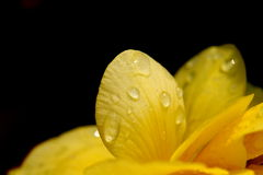 dewdrops Stockfoto