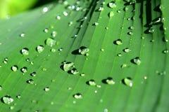 dewdrops obraz royalty free