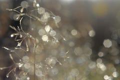 dewdrops Fotos de Stock
