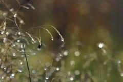 dewdrops Imagens de Stock Royalty Free