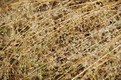 dewdrops Lizenzfreies Stockbild